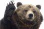 GRIZZLY BEAR KILLS CYCLIST