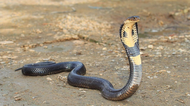 HEALTH MINISTER DEBUNKS REPORTS OF RUNNING OUT OF STOCK WITH ANTI-SNAKE VENOM