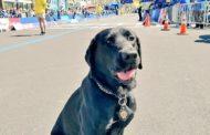 MAN ARRESTED FOR IMPROPER CARE OF 12 YEAR OLD DOG