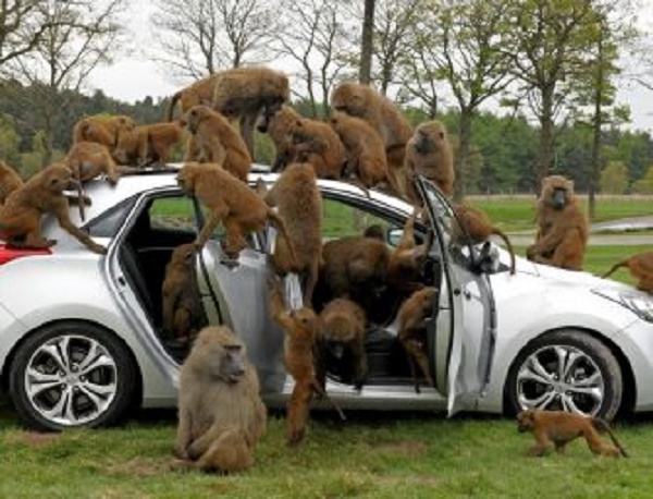 NIGERIA: A COLONY OF MONKEYS AND A CONGRESS OF BABOONS