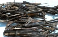 THE MAGIC HERB THAT STOPS LOVERS  (AS-AS, AS - SC) FROM HAVING CHILDREN WITH SICKLE CELL ANAEMIA